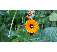 Yellow Flower Green Insect Photographic Print
