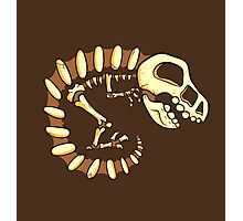 Dino Fossils Photographic Print
