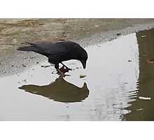 Crow Mirror Reflection  Photographic Print
