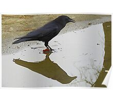 Crow Reflection (1) Large Poster