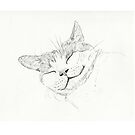 Sleeping Cat sketch by Asia Barsoski