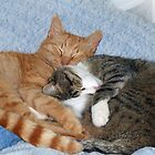 Sleeping Sweeties by Susan S. Kline
