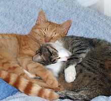 Sleeping Sweeties by Susan S. Kline