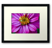 Pretty in Pink 3 Framed Print