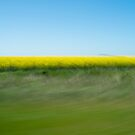Yellow Fields by Richard McKenzie
