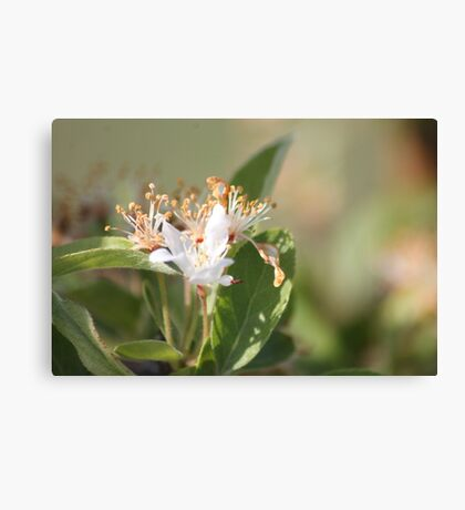 Fruit Tree Bloom Canvas Print