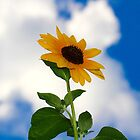 Sunflower in the Clouds 1 by ReidSmith