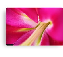 Hot Pink Lily Canvas Print
