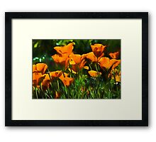 Brilliant Orange California Poppies - Impressions of Desert Spring Framed Print