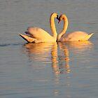 Swan Love by Jo Nijenhuis