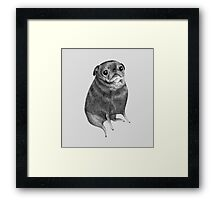 Sweet Black Pug Framed Print