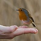 A Bird In The Hand by Jamie  Green