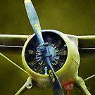 Plane - U-6A Beaver by Susan Savad