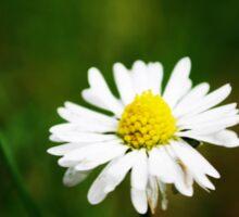 Daisy, Daisy. . . . Sticker