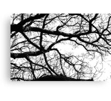 Silhouetted Branches Canvas Print