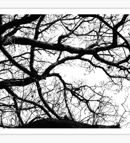 Silhouetted Branches Sticker