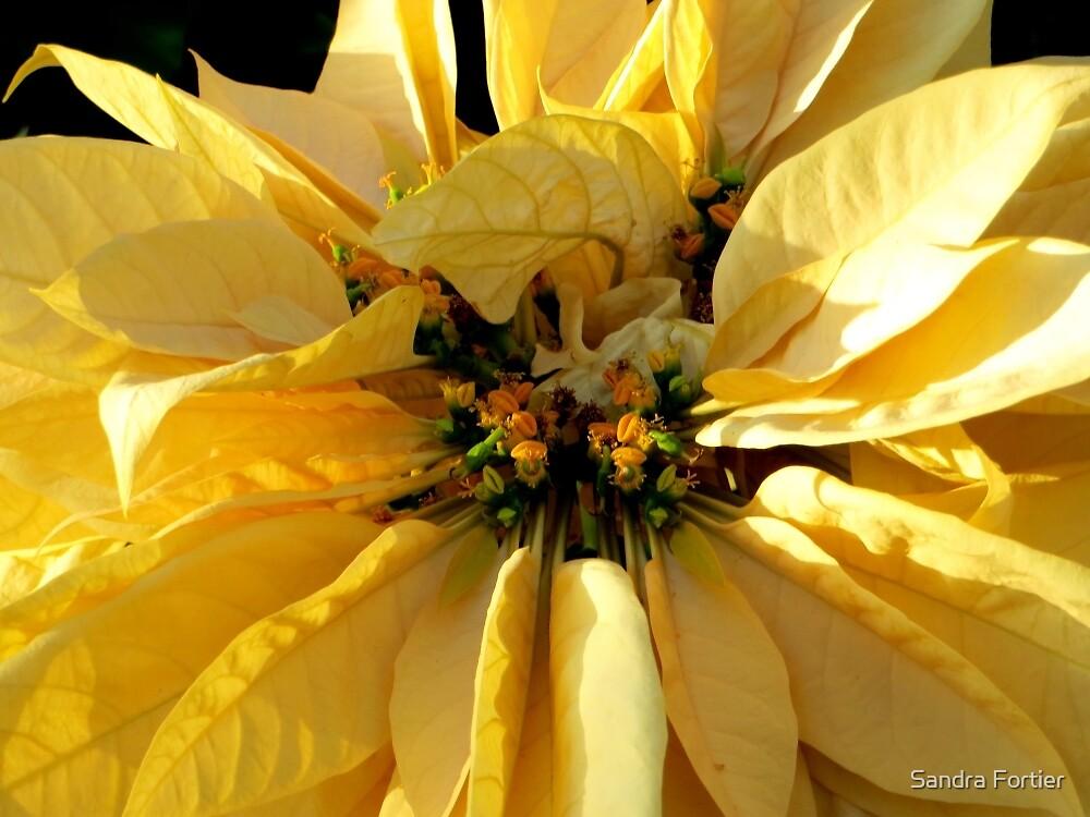 Golden Sunshine by Sandra Fortier