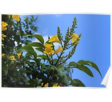 Yellow Flowers Blooming on a Tree Poster