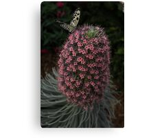 Millions of Tiny Flowers Plus a Butterfly Canvas Print