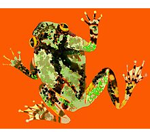 Gray Tree Frog Photographic Print