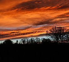 Shepherds  Delight by ChelseaAnnVic