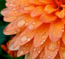 Rain Drops on Flower Sticker