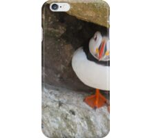 Puffin under a rock, Saltee Islands, County Wexford, Ireland iPhone Case/Skin