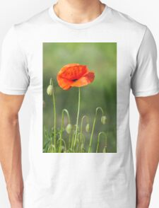 Beautiful photo of poppy in bloom T-Shirt