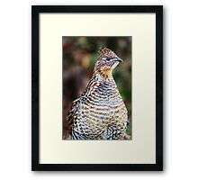 Partridge Photo Framed Print