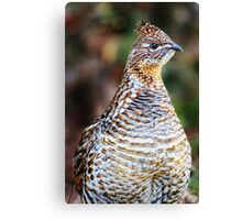 Partridge Photo Canvas Print