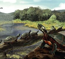 Painted Turtle - WITH Text by Gina Garavalia