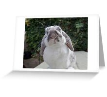 Whisker Envy? Greeting Card