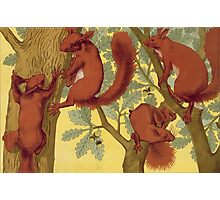 Squirrels by Maurice Pillard Verneuil Photographic Print