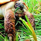 Isham's Turtle...One Cool Dude by trueblvr