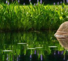 Pickerel at the Pond Sticker
