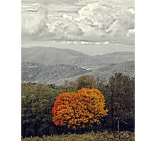 Lone Fall Tree Photographic Print