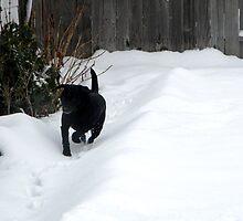 Snow Path by DustysPhotos