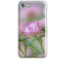 Soft pink Aster  iPhone Case/Skin