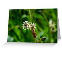 Garden Plants Greeting Card
