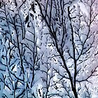 Snow Colors by Angelika  Vogel