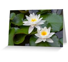 European White Waterlily Greeting Card