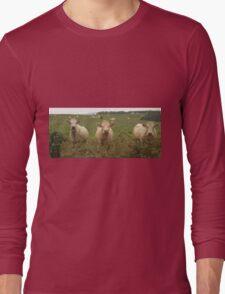 Curious Cork Cows Long Sleeve T-Shirt