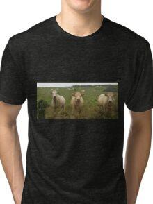 Curious Cork Cows Tri-blend T-Shirt
