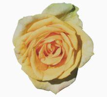 Yellow Rose Baby Tee