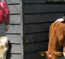 The Little Farmyard - Keukenhof Gardens Sticker