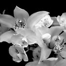 A White Orchid Wedding  - B/W by Michael May