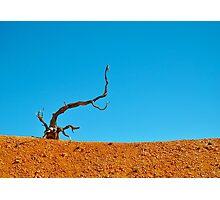 Bryce Canyon National Park. Utah, USA Photographic Print