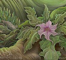 Jimson Weed in Bloom by judecowell