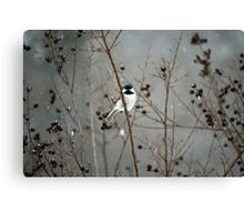 Chilly Chick-a-Dee Canvas Print