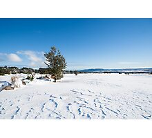 Snowy landscape. Photographic Print